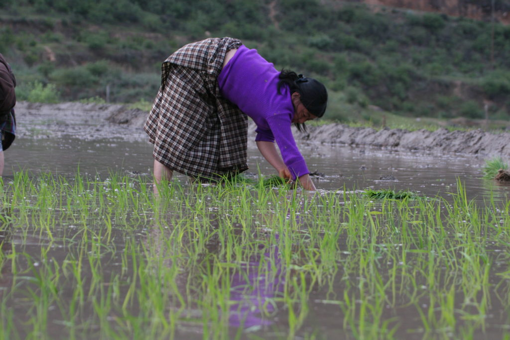 lady in field | Bhutan Visit